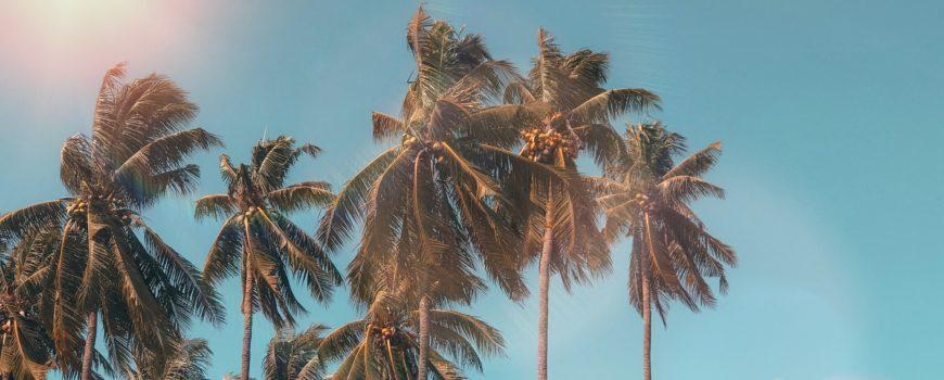 coconut-dawn-daylight-exotic-1152359